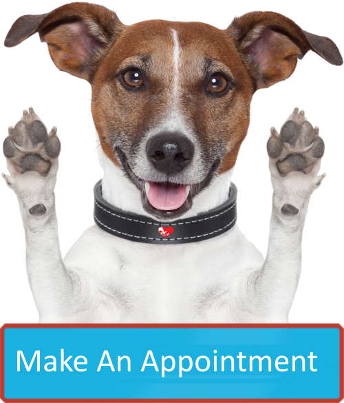Make an Appointment at FLORENCE ANIMAL HOSPITAL