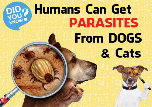 Flea, Tick and Heart worm Parasite Screening & Preventatives