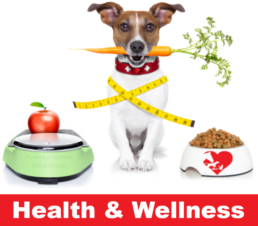 Health & Wellness by Florence Animal Hospital