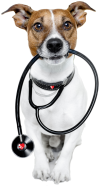 Veterinary Services