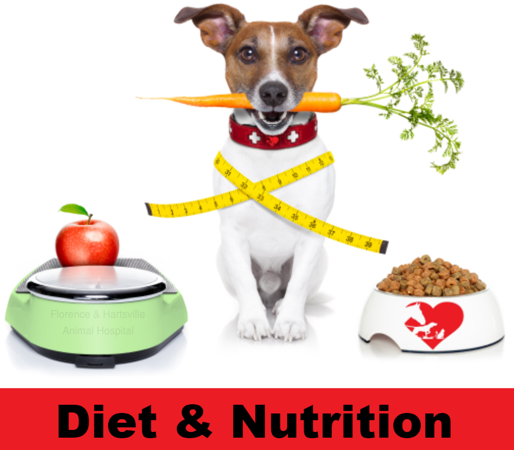 Diet and Nutrition by Florence Animal Hospital