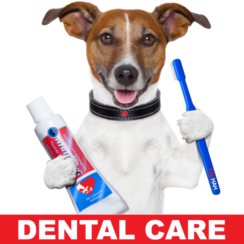 Dentistry & Teeth Cleaning - Learn More