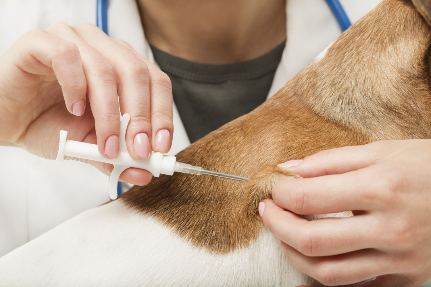 The pet microchipping procedure is relatively quick and easy