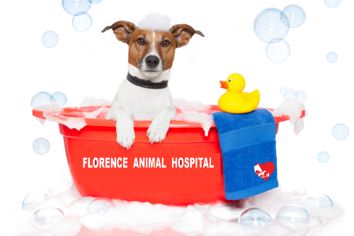Florence Animal Hospital Pet Grooming