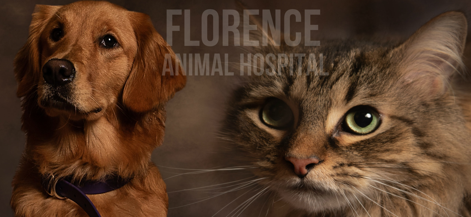 Veterinary ❤️ Florence Animal Hospital